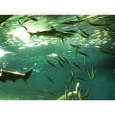 Aquarium @ Tokyo