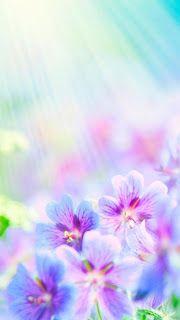 خلفيات ايفون ورود Iphone Wallpapers 4k Best Flower Wallpaper Flower Wallpaper Flower Iphone Wallpaper