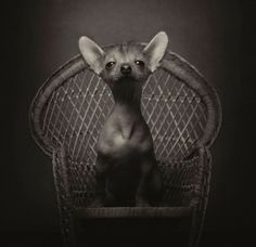 Expressive Animal Portraits Capture the Human Emotions in Our Pets