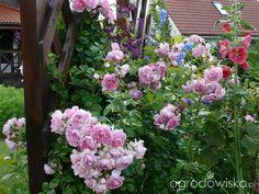 Ogród prawie romantyczny - strona 565 - Forum ogrodnicze - Ogrodowisko