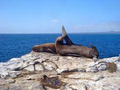 Galapágy sú explodujúcej rozmanitou krásou a prírodou.  Nebudete ľutovať návšteve tohto vynikajúce miesto.  Prečítajte si podrobnosti a inšpiráciu k návšteve jedného z najunikátnejších miest na Zemi!