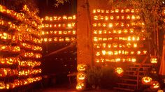 Lit Jack-O-Lanterns! Such a beautiful picture!