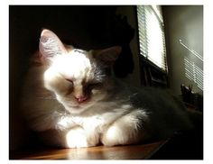 Cat Nap No. 2 Deep In Cat Thought Sleepy by LovesParisStudio