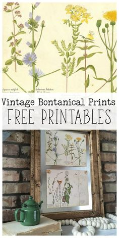 Four free vintage botanical prints are the perfect way to decorate for spring! Vintage Botanical Prints, Botanical Art, Vintage Prints, Vintage Decor, Vintage Farmhouse, Farmhouse Decor, Diy Wall Art, Diy Art, Free Printable Art
