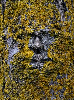 sharkoman Cool Rocks, Beautiful Rocks, Nephilim Giants, Cool Pictures Of Nature, Tree People, Tree Faces, Alien Planet, Tree Photography, Tree Sculpture