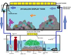 Saltwater Sump Diagram | http://cdn.saltwaterfish.com/3/31/31...SUMPLAYOUT.png