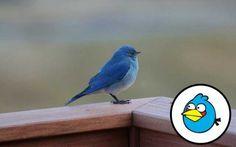 ANGRY BIRDS NA ŻYWO | Moja Osobistosc