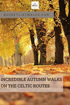 We've come up with a collection of Autumn walks on the Celtic routes of Wales and Ireland, including strolls in woodlands, valleys & forests. These include Pembrokeshire, Ceredigion and Carmarthenshire in Wales, and Wicklow, Waterford and Wexford in Ireland. Wales hiking | Autumn walks | UK hiking | Autumn walks | Fall season | UK Travel | Ireland walks
