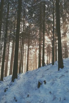 Frozen. #forest #winter #holiday