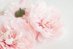 TWO Light Pink Peonies   4 Inches  Silk by SimplySerraFloral   https://www.etsy.com/shop/SimplySerraFloral?ref=hdr_shop_menu