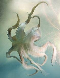 octopus white