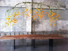 Suspended branches dripping with flowers