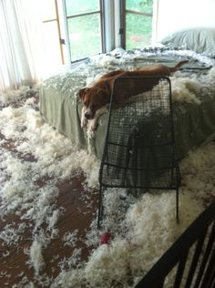 Why is this cute? Well, because the dog ate the pillows... and then had to go to sleep without a pillow :(