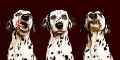 """As belas fotografias caninas de Elke Vogelsang - Já dizia aquele famoso comercial: """"cachorro é tudo de bom"""". E é a mais pura verdade. Nossos amigos caninos expressam com sinceridade seus sentime..."""