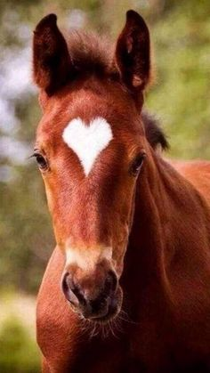 I wonder if this is the foals real marking? I wonder if this is the foals real marking? Funny Horses, Cute Horses, Pretty Horses, Horse Love, Baby Animals Super Cute, Cute Little Animals, Cute Funny Animals, Cute Dogs, Baby Animals Pictures