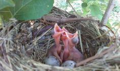 Baby birds in an apple tree at the farm. :)