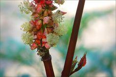 Rizinusblüten - Jahreszeiten - Galerie - Community