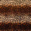Definitely Leopard