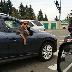 The scrub   As 100 fotos caninas mais importantes de todos os tempos