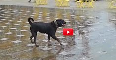I Smiled So Big Throughout This Entire Video! I Love Dogs! | The Animal Rescue Site Blog