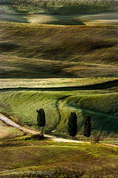 Cipressi in Toscana  Italy