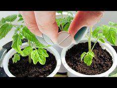 Summer House Garden, Home And Garden, Mandala Rocks, Garden Plants, Garden Design, Succulents, Gardens, Youtube, Sodas