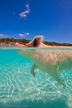 Swam with the pigs in exuma Bahamas