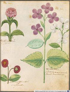 Hortulus Monheimensis - Süddeutschland 1615