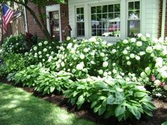 Hydrangeas and hostas. This might work on the side of the house