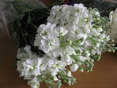 White Stock by CGWF, via Flickr