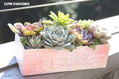 完成したエケベリア達の寄せ植え♪ - Love Succulent