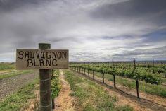 Top 10 des meilleures régions productrices de Sauvignon blanc.