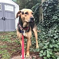 Seattle, Washington - Hound (Unknown Type). Meet Fay, a for adoption. https://www.adoptapet.com/pet/21205489-seattle-washington-hound-unknown-type-mix