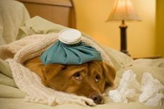http://www.buzzle.com/articles/dog-health/Pneumonia treatment for dogs