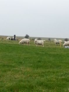 Couldn't resist snapping a pic of a sheep checking ME out. Stonehenge, London Travel, Sheep, Mount Rushmore