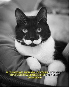 Hercule Poirot Cat quotes to Hastings