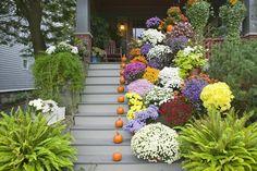 flores preciosas en el porche