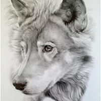 Realistic Drawings Realistic Pencil Drawings of Animals Pictures) - Pencil Drawings Of Animals, Realistic Pencil Drawings, Amazing Drawings, Beautiful Drawings, Cool Drawings, Amazing Art, Drawing Animals, Drawings Of Wolves, Drawings Of Dogs