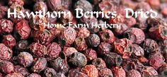 At Home Farm Herbery in Munfordville, we have dried, all natural, chemical free Hawthorn Berries which are used as dried, crushed and/or powdered. Hawthorn berries are more often used to make tinctures than teas, smoothies and punches. Order yours today.  http://www.localharvest.org/hawthorn-berries-dried-all-natural-chemica-C28347