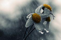 Rain (by Makis Bitos)