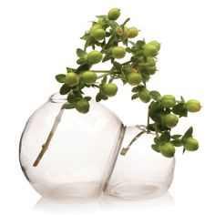A simple, bubbly design makes this vase a playful winner or tabletop or desktop. With two separate compartments, you can play with color and different flowers to create your own… Marimo Moss Ball Terrarium, Glass Terrarium, Glass Vase, Terrarium Diy, Deco Floral, Arte Floral, Floral Design, Ikebana, Bud Vases