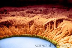 The human iris magnified! - Google Search