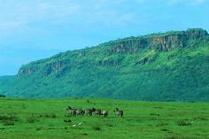 Lake Nakuru National Park , Kenya