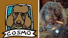 Cosmo! Brown Standard Poodle: Custom Pet Portrait by Anne Leuck Feldhaus http://AnnesArt.com