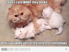 Awww... fluffy kittens...