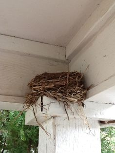 we have birds who nest on top of our porch columns too....you gotta dodge them to get inside the house when they are nesting.