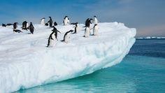 Risultati immagini per ghiacciai pinguini