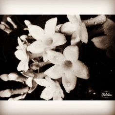 Flowers Night