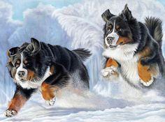 5 x Bernese Mountain Dog Greetings Cards Dashing Through The
