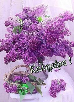 Emoji Pictures, Good Morning Images, Beautiful Images, Floral Wreath, Georgia, Iphone, Pictures, Gud Morning Images, Floral Crown